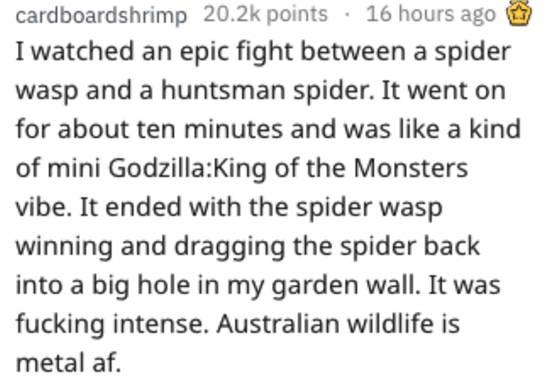 Text - cardboardshrimp 20.2k points 16 hours ago I watched an epic fight between a spider wasp and a huntsman spider. It went on for about ten minutes and was like a kind of mini Godzilla:King of the Monsters vibe. It ended with the spider wasp winning and dragging the spider back into a big hole in my garden wall. It was fucking intense. Australian wildlife is metal af.