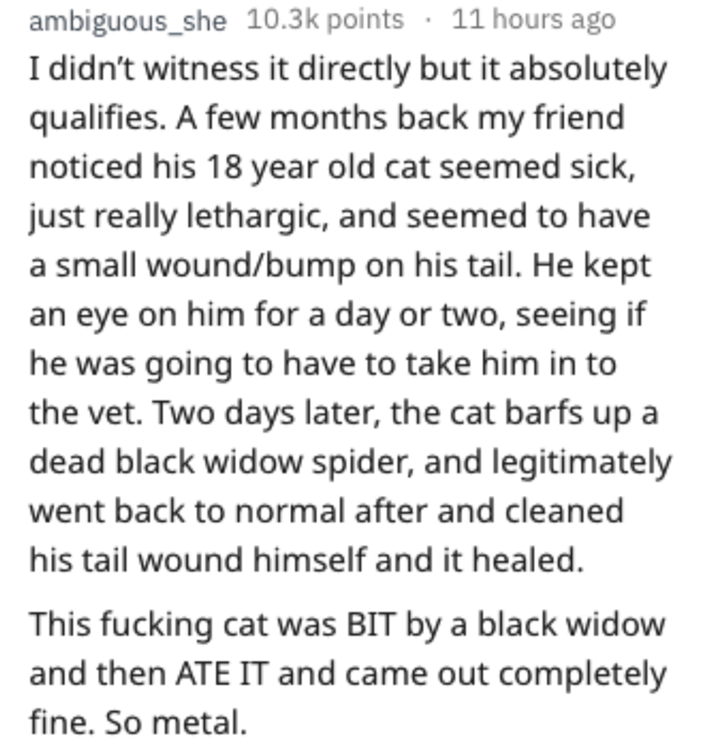 Text - ambiguous_she 10.3k points 11 hours ago I didn't witness it directly but it absolutely qualifies. A few months back my friend noticed his 18 year old cat seemed sick, just really lethargic, and seemed to have a small wound/bump on his tail. He kept an eye on him for a day or two, seeing if he was going to have to take him in to the vet. Two days later, the cat barfs up dead black widow spider, and legitimately went back to normal after and cleaned his tail wound himself and it healed. Thi