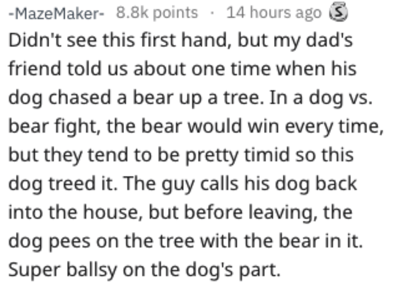 Text - -MazeMaker- 8.8k points 14 hours ago Didn't see this first hand, but my dad's friend told us about one time when his dog chased a bear up a tree. In a dog vs. bear fight, the bear would win every time but they tend to be pretty timid so this dog treed it. The guy calls his dog back into the house, but before leaving, the dog pees on the tree with the bear in it. Super ballsy on the dog's part.