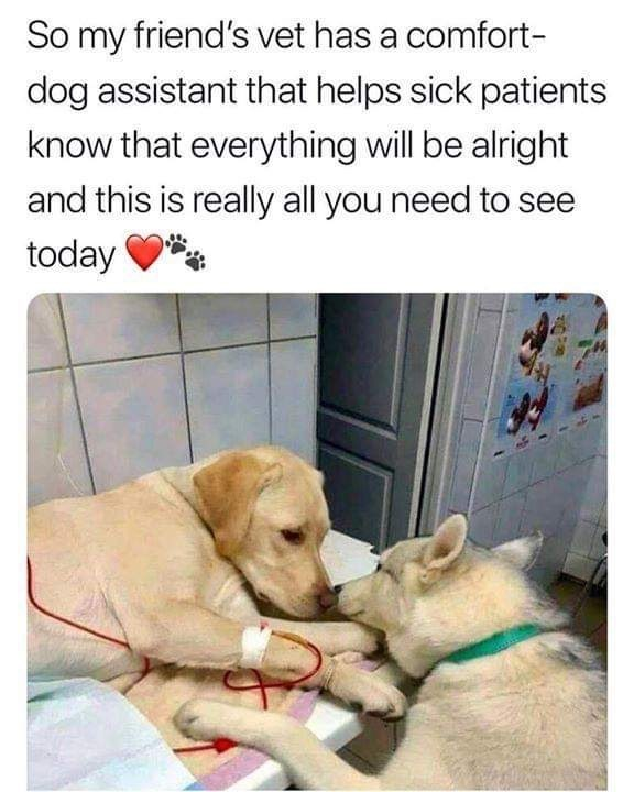 Canidae - So my friend's vet has a comfort- dog assistant that helps sick patients know that everything will be alright and this is really all you need to see today