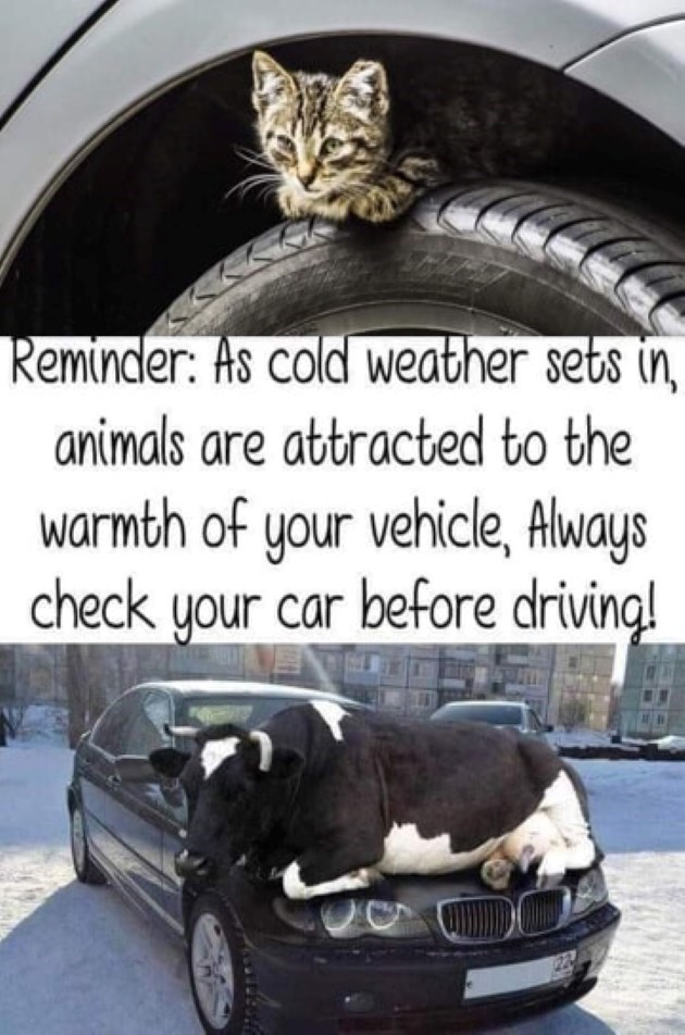 psa reminder cold weather Cats - 9370057728