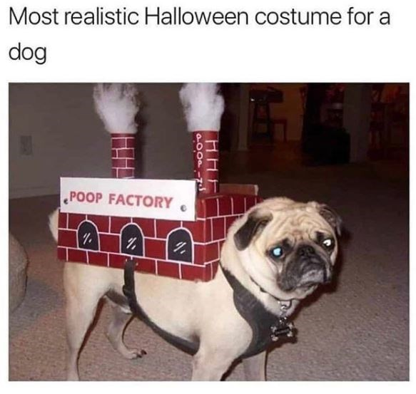 Pug - Most realistic Halloween costume for a dog POOP FACTORY POOPINS