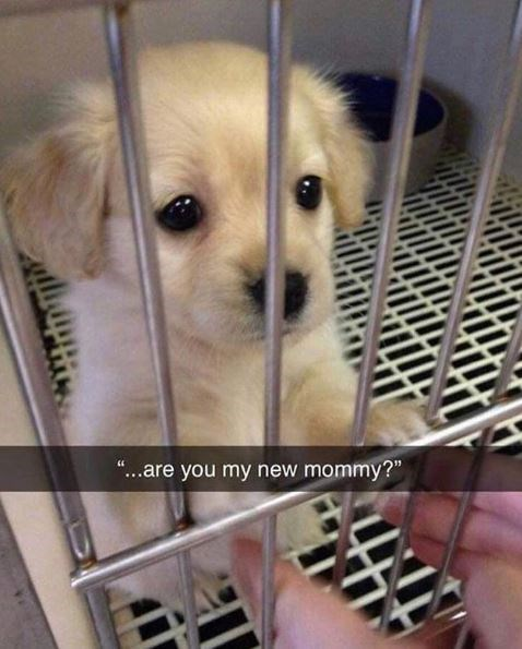 Dog - ..are you my new mommy?""