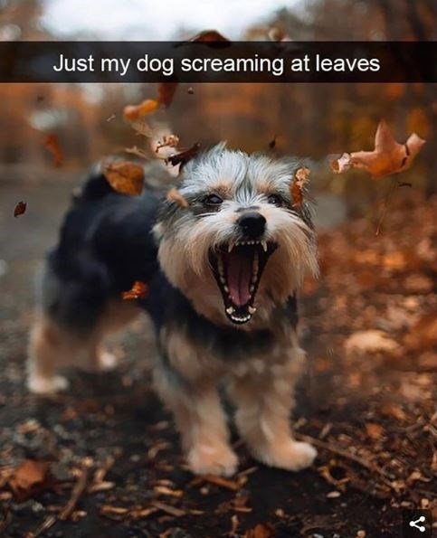 Dog breed - Just my dog screaming at leaves