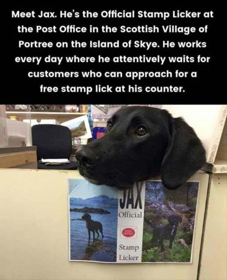 Dog - Meet Jax. He's the Official Stamp Licker at the Post Office in the Scottish Village of Portree on the Island of Skye. He works every day where he attentively waits for customers who can approach for a free stamp lick at his counter. JAX Official FOIT OFFICE Stamp Licker