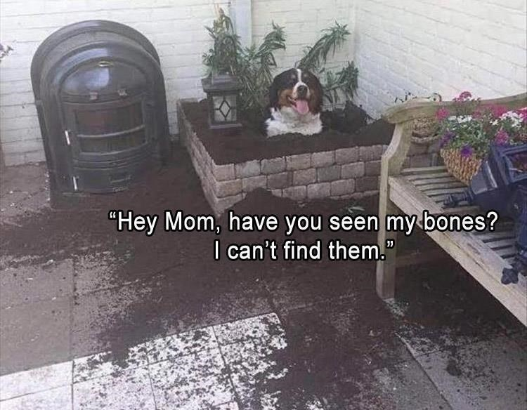 "Property - ""Hey Mom, have you seen my bones? I can't find them."