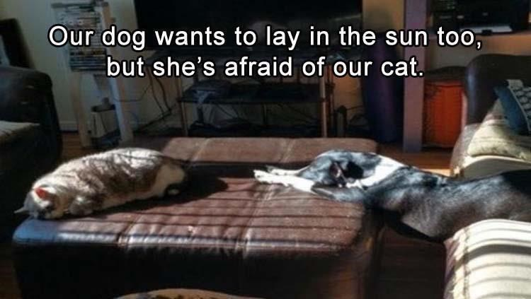 Room - Our dog wants to lay in the sun too, but she's afraid of our cat.