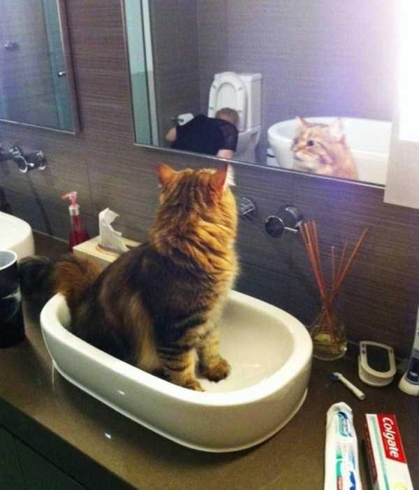 Cat - Colgate