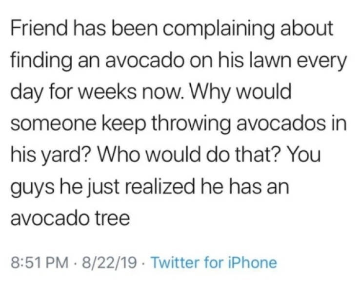 Text - Friend has been complaining about finding an avocado on his lawn every day for weeks now. Why would someone keep throwing avocados in his yard? Who would do that? You guys he just realized he has an avocado tree 8:51 PM 8/22/19 Twitter for iPhone