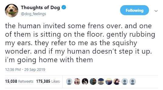 Text - Thoughts of Dog Following @dog feelings the human invited some frens over. and one of them is sitting on the floor. gently rubbing my ears. they refer to me as the squishy wonder. and if my human doesn't step it up. i'm going home with them 12:36 PM - 29 Sep 2019 15,038 Retweets 175,385 Likes