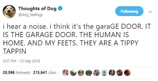 Text - Thoughts of Dog Following @dog feelings i hear a noise.i think it's the garaGE DOOR. IT IS THE GARAGE DOOR. THE HUMAN IS HOME. AND MY FEETS. THEY ARE A TIPPY TAPPIN 3:37 PM -13 Sep 2019 20,596 Retweets 215,641 Likes