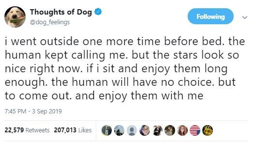 Text - Thoughts of Dog Following @dog feelings i went outside one more time before bed. the human kept calling me. but the stars look so nice right now. if i sit and enjoy them long enough. the human will have no choice. but to come out. and enjoy them with me 7:45 PM -3 Sep 2019 22,579 Retweets 207,013 Likes