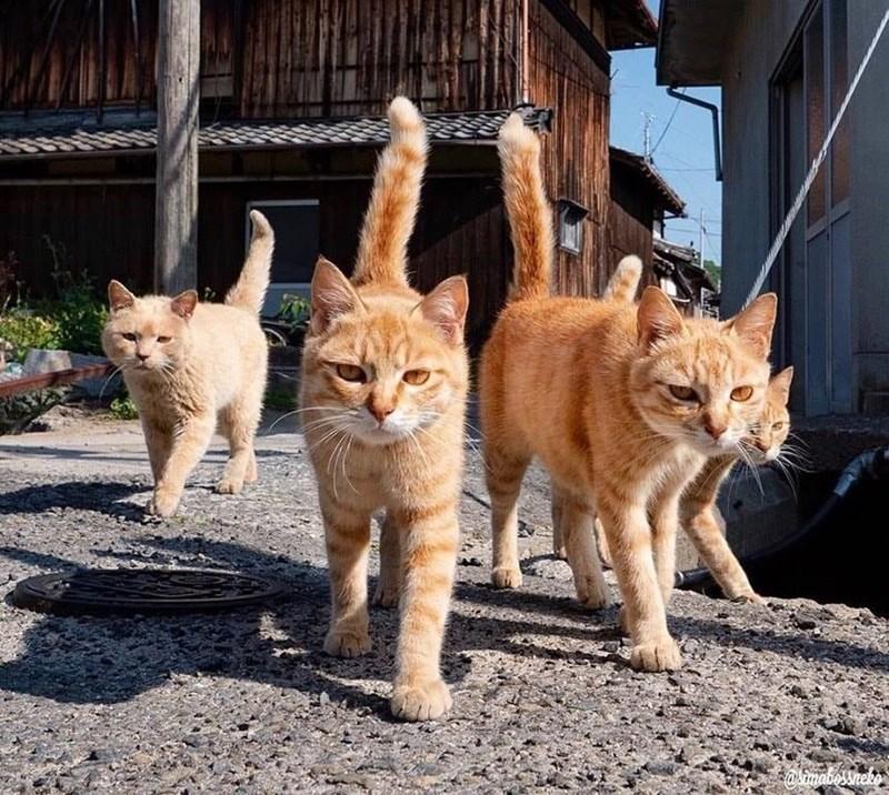 Cat - akimabossneko