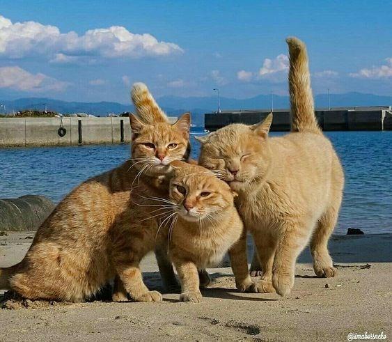 Cat - imabossncko