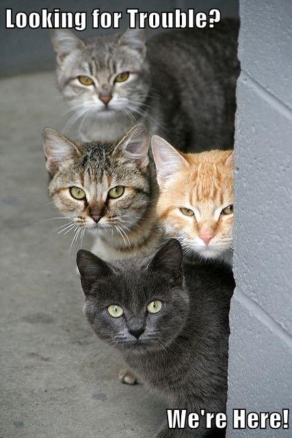 Cat - Looking for Trouble? We're Here!
