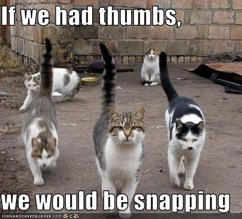Cat - If we had thumbs we would be snapping
