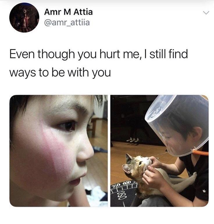 cat memes - 9370471936
