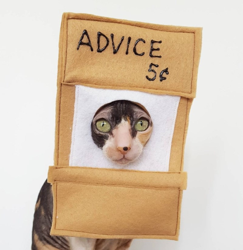 Cat - ADVICE 5¢