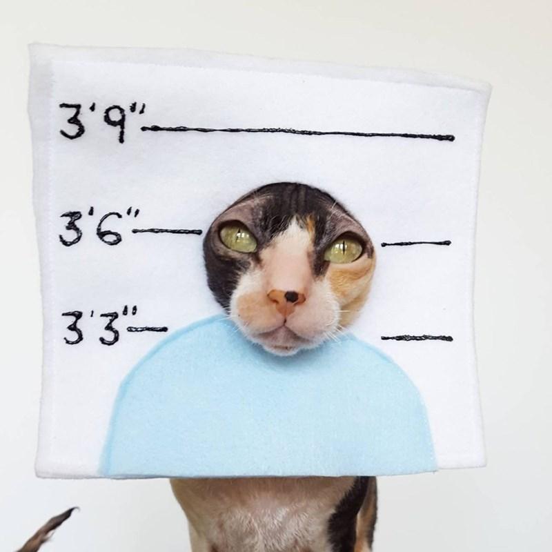 Cat - 3'9 3'6 33