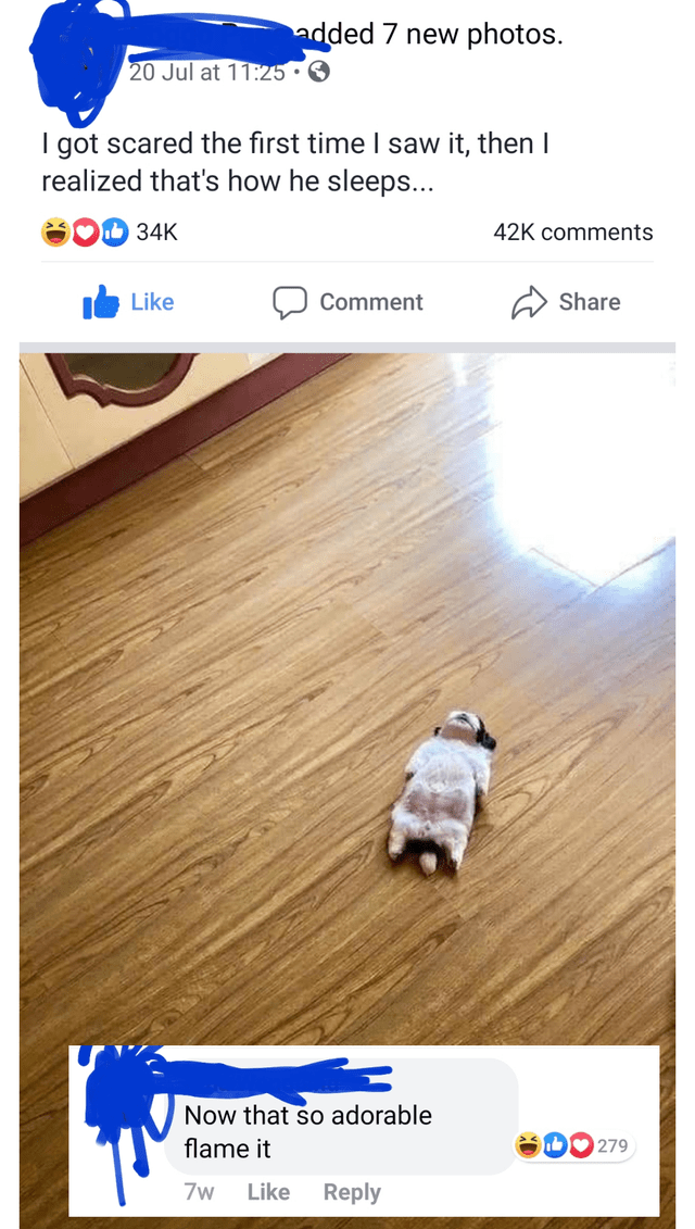 Text - added 7 new photos. 20 Jul at 11:25 I got scared the first time I saw it, then I realized that's how he sleeps... 34K 42K comments Like Comment Share Now that so adorable 279 flame it 7w Like Reply