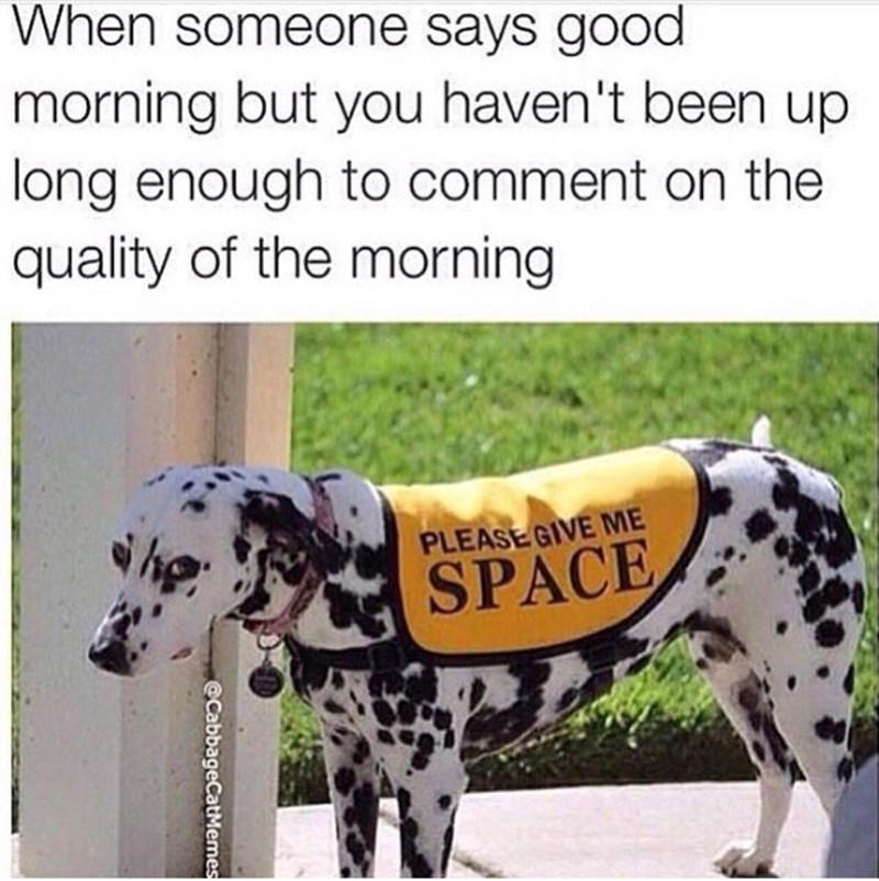 Dog - When someone says good morning but you haven't been up long enough to comment on the quality of the morning PLEASE GIVE ME SPACE @CabbageCatM