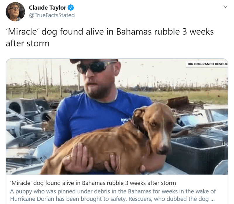 Vertebrate - Claude Taylor @TrueFactsStated 'Miracle' dog found alive in Bahamas rubble 3 weeks after storm BIG DOG RANCH RESCUE 'Miracle' dog found alive in Bahamas rubble 3 weeks after storm A puppy who was pinned under debris in the Bahamas for weeks in the wake of Hurricane Dorian has been brought to safety. Rescuers, who dubbed the dog...