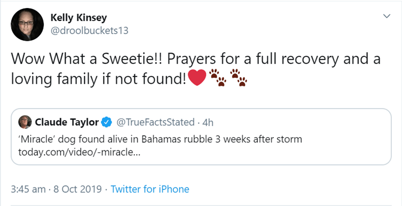 Text - Kelly Kinsey @droolbuckets13 Wow What a Sweetie!! Prayers for a full recovery and loving family if not found! Claude Taylor @TrueFactsStated 4h 'Miracle' dog found alive in Bahamas rubble 3 weeks after storm today.com/video/-miracle... 3:45 am 8 Oct 2019 Twitter for iPhone
