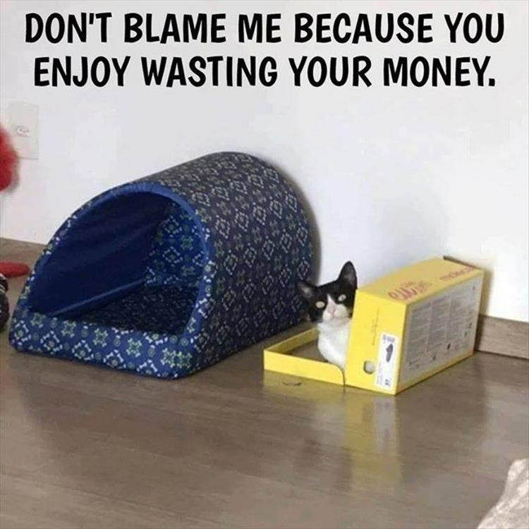 Cat supply - DON'T BLAME ME BECAUSE YOU ENJOY WASTING YOUR MONEY. [हमे