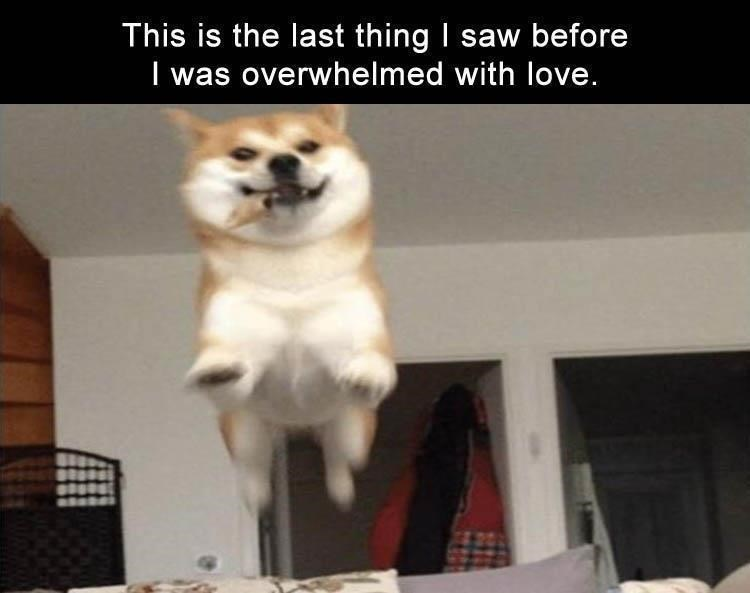 Dog - This is the last thing I saw before overwhelmed with love.