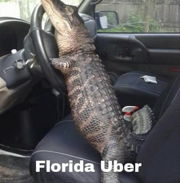 Car seat - Florida Uber