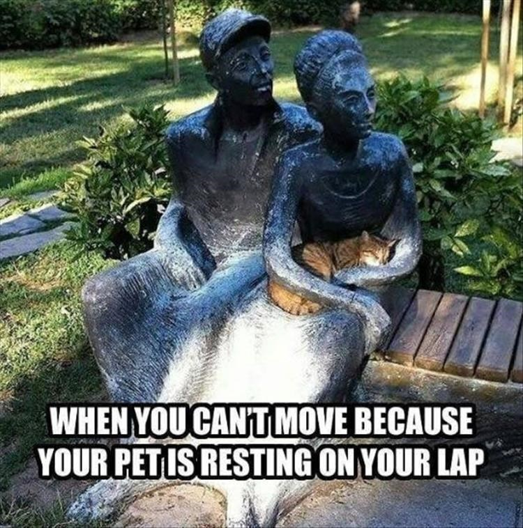 Statue - WHEN YOU CANT MOVE BECAUSE YOUR PET IS RESTING ON YOUR LAP