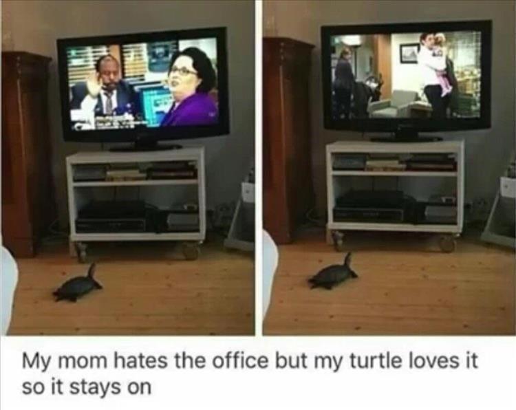 Room - My mom hates the office but my turtle loves it so it stays on