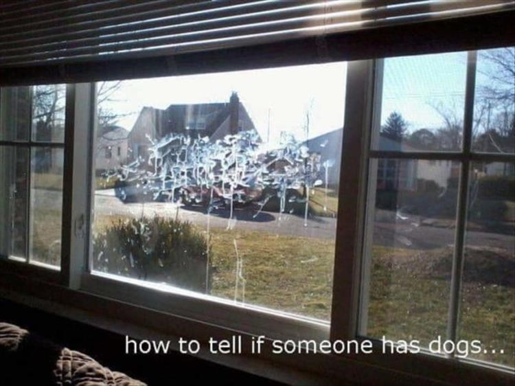 Window - how to tell if someone has dogs...