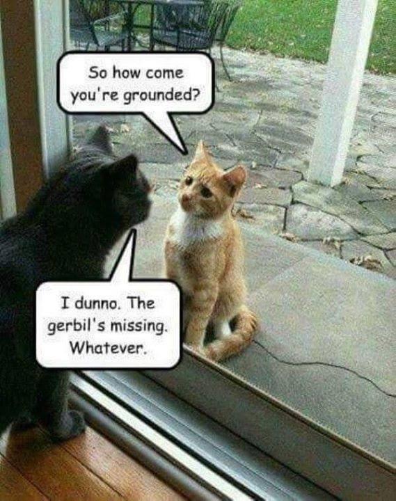cat memes - 9370813696