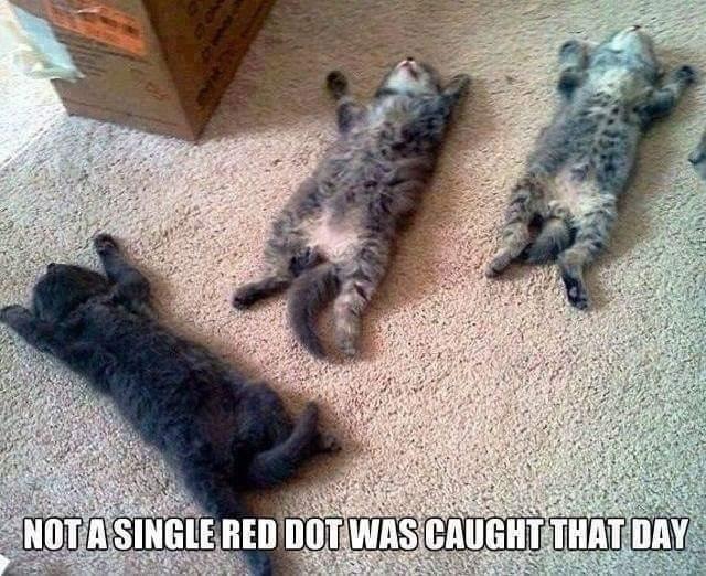 funny cat memes - 9370814208