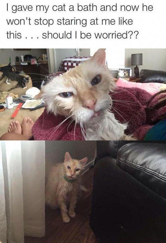 cat tweets - 9370817024