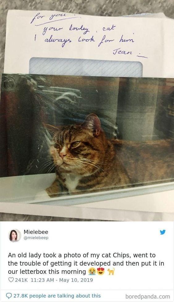 cat tweets - 9370817536