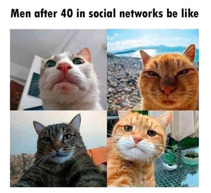 Cat - Men after 40 in social networks be like