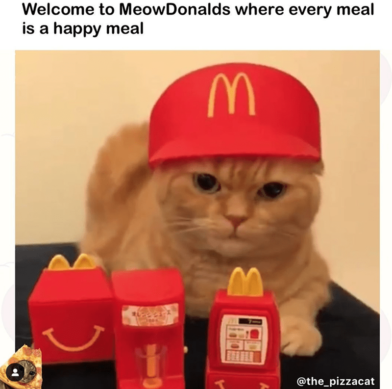 Cat - Welcome to MeowDonalds where every meal is a happy meal M @the_pizzacat