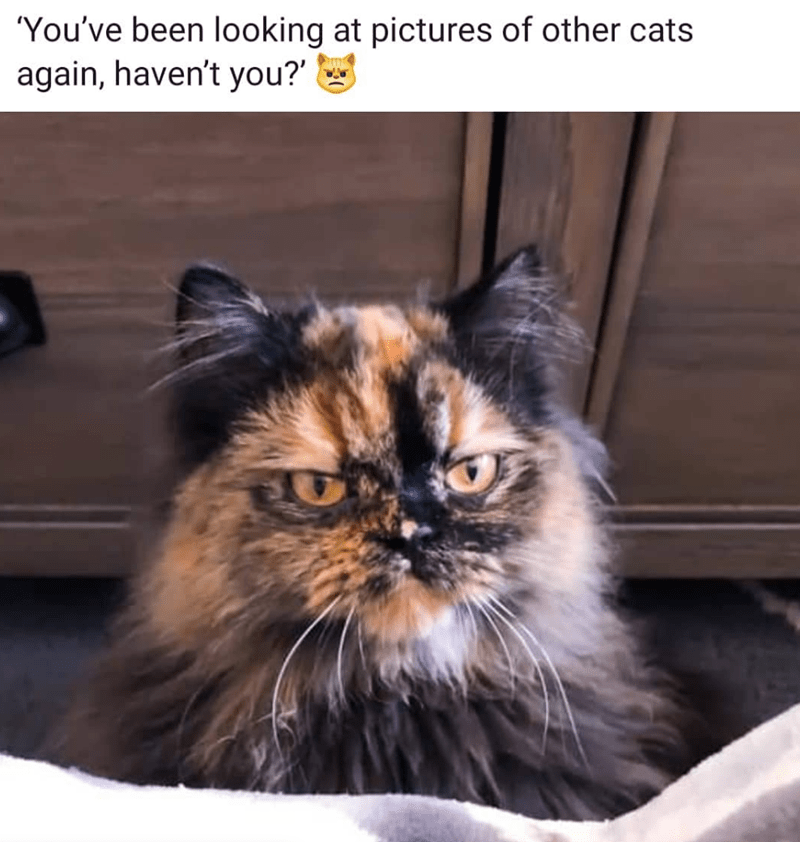 Cat - 'You've been looking at pictures of other cats again, haven't you?'