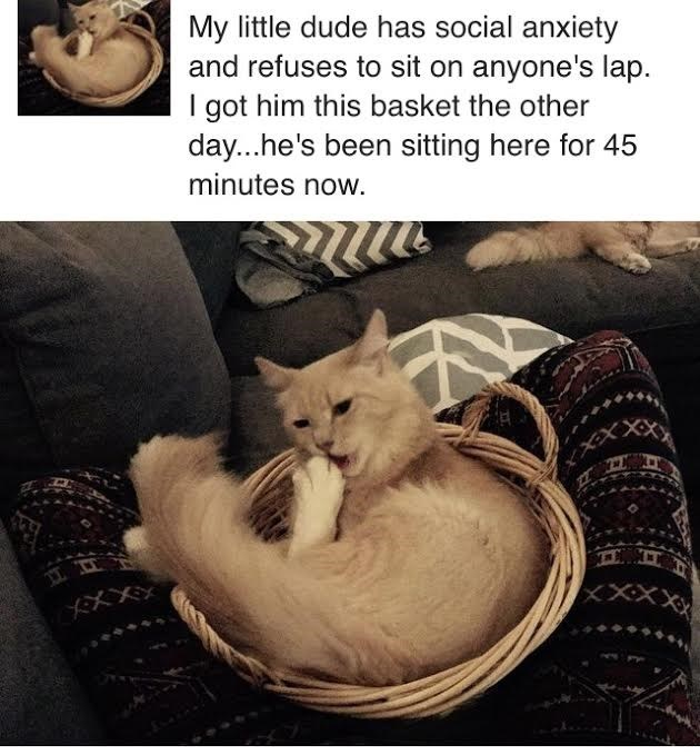 Cat - My little dude has social anxiety and refuses to sit on anyone's lap I got him this basket the other day...he's been sitting here for 45 minutes now. XXXX