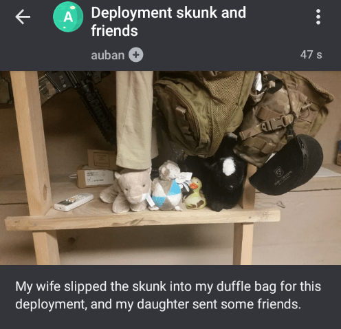 Room - A Deployment skunk and friends 47 S auban My wife slipped the skunk into my duffle bag for this deployment, and my daughter sent some friends.