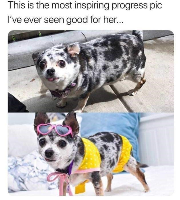 Dog - This is the most inspiring progress pic I've ever seen good for her...