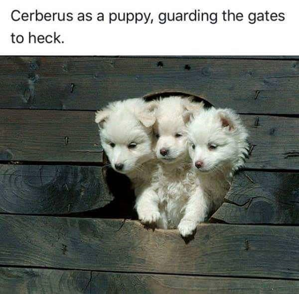Mammal - Cerberus as a puppy, guarding the gates to heck.