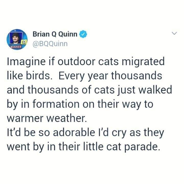 Text - Brian Q Quinn @BQQuinn WINNER Imagine if outdoor cats migrated like birds. Every year thousands and thousands of cats just walked by in formation on their way to warmer weather. It'd be so adorable I'd cry as they went by in their little cat parade.