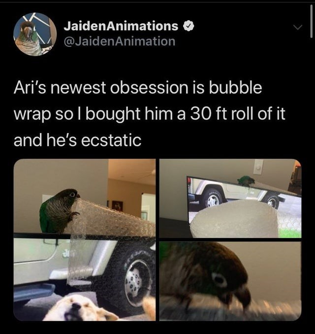 Adaptation - JaidenAnimations @JaidenAnimation Ari's newest obsession is bubble wrap so l bought him a 30 ft roll of it and he's ecstatic