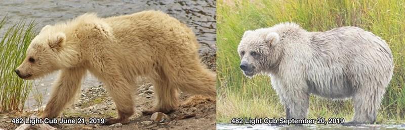 Mammal - 482 Light Cub September 20, 2019 482 Light Cub June 21, 2019