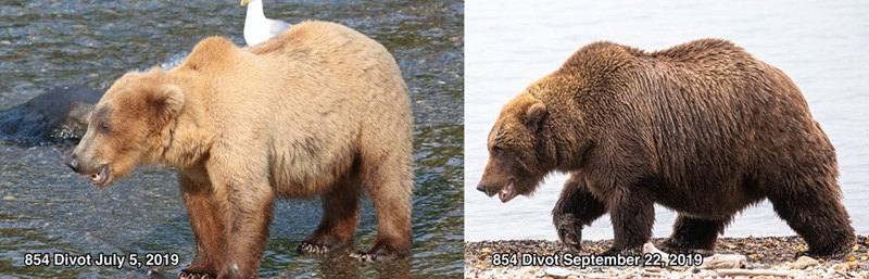 Brown bear - 854 Divot September 22, 2019 854 Divot July 5, 2019