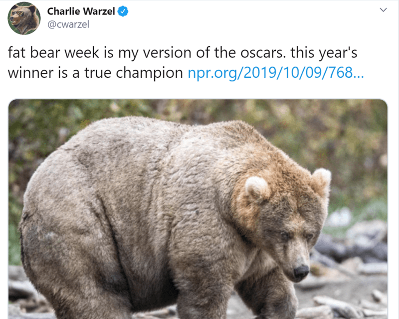 Vertebrate - Charlie Warzel @cwarzel fat bear week is my version of the oscars. this year's winner is a true champion npr.org/2019/10/09/768...
