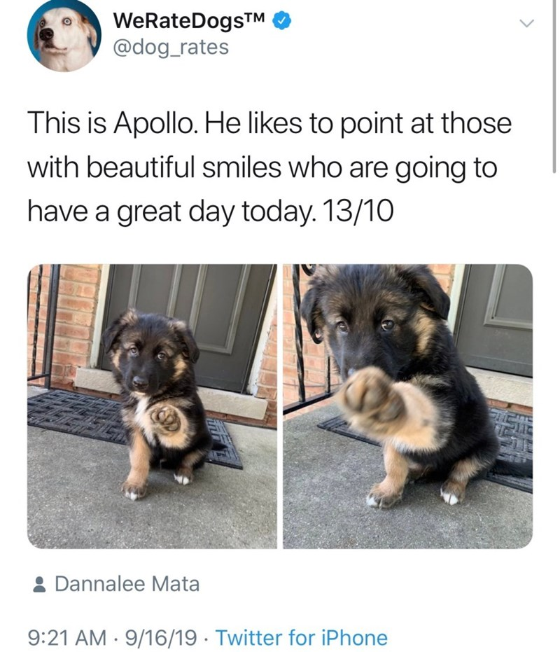Dog breed - WeRateDogsTM @dog_rates This is Apollo. He likes to point at those with beautiful smiles who are going to have a great day today. 13/10 & Dannalee Mata 9:21 AM 9/16/19 Twitter for iPhone